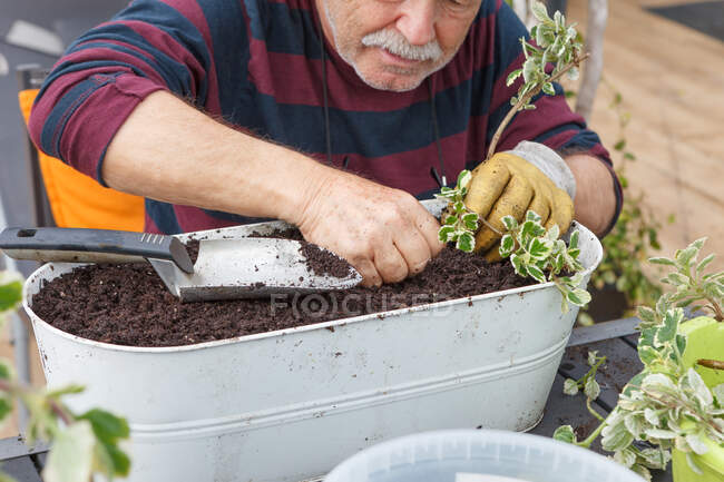 Обрезанный старший пенсионер в повседневной одежде и шляпе посадки саженцев в горшок, сидя за столом в саду рядом с домом — стоковое фото