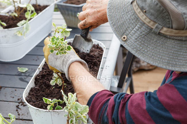 С высоты зрения неузнаваемого пенсионера старшего возраста в повседневной одежде и шляпе посадки саженцев в горшок во время сидения за столом в саду рядом с домом — стоковое фото