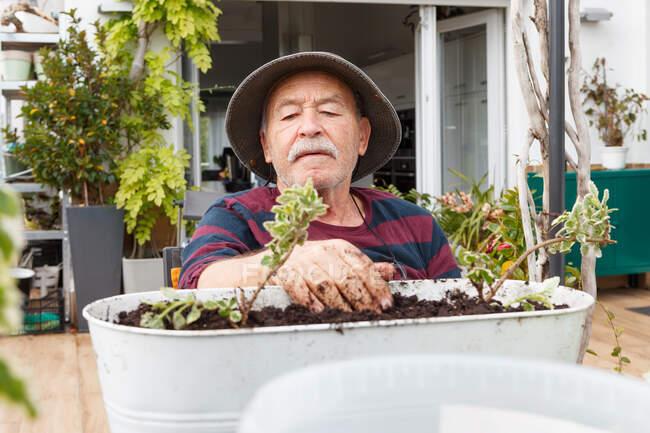 Старший пенсионер в повседневной одежде и шляпе посадки саженцев в горшок, сидя за столом в саду рядом с домом — стоковое фото