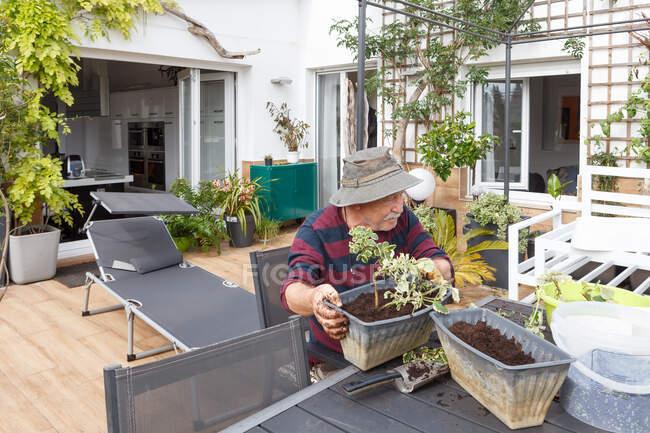 Вид сбоку пожилого мужчины в повседневной одежде и шляпе, сажающего саженцы в горшок, сидя за столом в саду возле дома — стоковое фото