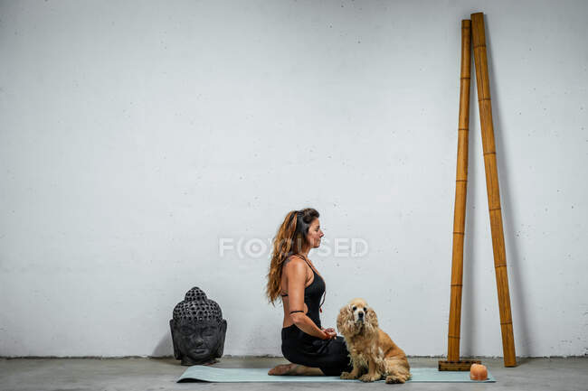 Side view of content female sitting on yoga mat with Russian Cocker Spaniel dog and meditating in Padmasana in room with Buddha head and bamboo sticks — стоковое фото