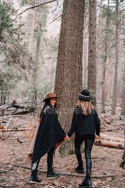 Полный задний вид на стильных молодых подруг в модной одежде и шляпах, стоящих рядом с высоким деревом секвойи в лесу, проводя время в Национальном парке Йосемити в Калифорнии — стоковое фото