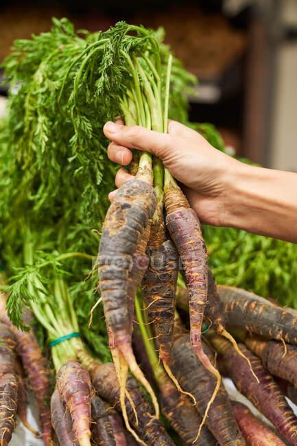 Mano femenina con rábano en la mano en una frutería - foto de stock