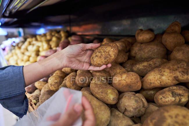 Mains féminines avec ramassage des pommes de terre dans un panier — Photo de stock