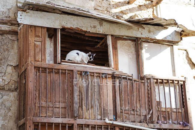 De baixo de gato doméstico sentado em pequena janela de edifício deteriorado envelhecido no bairro pobre da cidade de Jeddah, na Arábia Saudita — Fotografia de Stock