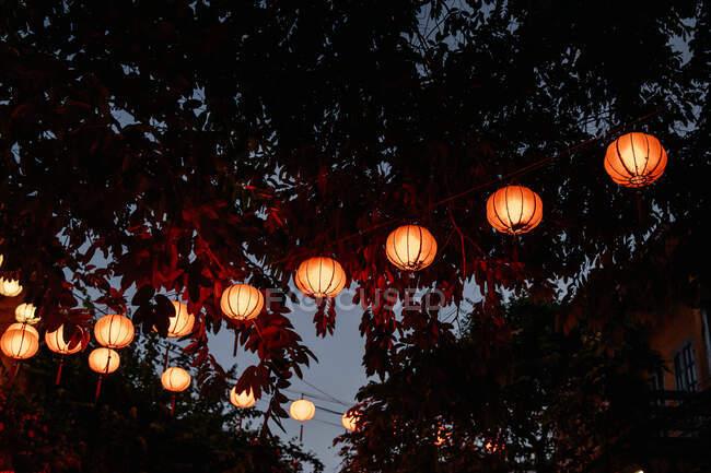 Dal basso di lanterne di carta orientale illuminate appese nel fitto fogliame di alberi al crepuscolo — Foto stock