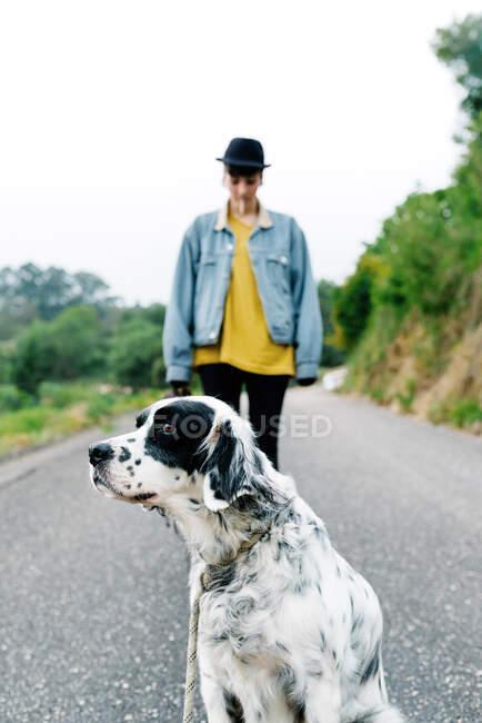 Inglese setter cane con macchie nere in piedi a terra, mentre godendo a piedi con il proprietario nel parco — Foto stock