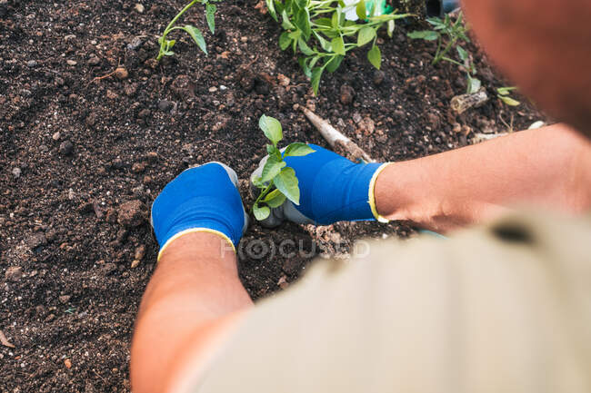 From above cropped unrecognizable male in casual wear and gloves planting seedlings in soil while working in backyard in spring day in countryside — Stock Photo