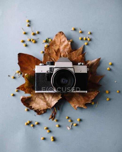 De cima vista da câmera de filme vintage composta em folhas de bordo seco na superfície cinza no estúdio moderno — Fotografia de Stock