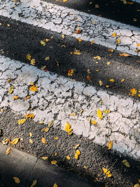 From above of yellow fallen leaves on asphalt ground with painted white lines of crosswalk on sunny day in autumn — Stock Photo