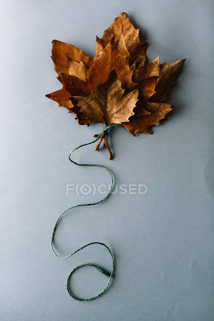 Bunch of bright dry maple leaves tied together with rope composed in shape of balloon on gray background — Stock Photo
