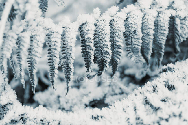 High angle of black and white backdrop with frosted shrubs and grass on glade in nature in wintertime — Stock Photo