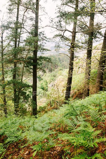 Forêt verte avec divers arbres et fougères en pleine croissance au premier plan — Photo de stock
