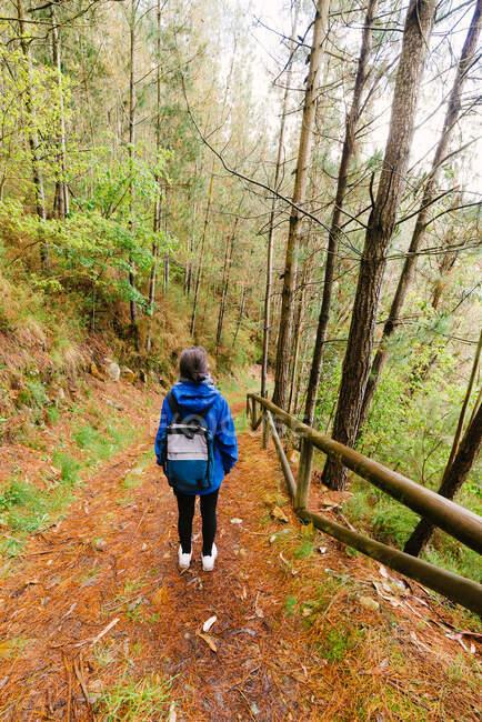 Турист в лесу в пасмурный день — стоковое фото