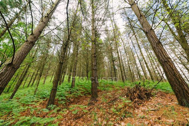 Paysage spectaculaire de grands arbres poussant dans les bois de Hoces del Esva — Photo de stock