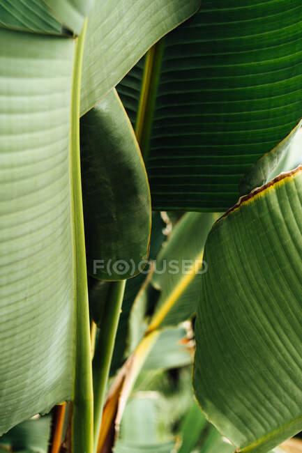 Vorderseite der tropischen Pflanze mit üppigen Blättern — Stockfoto