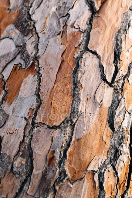 Крупный план старого ствола дерева сухой светло-коричневый кора с грубой и неровной поверхностью с трещинами во второй половине дня — стоковое фото