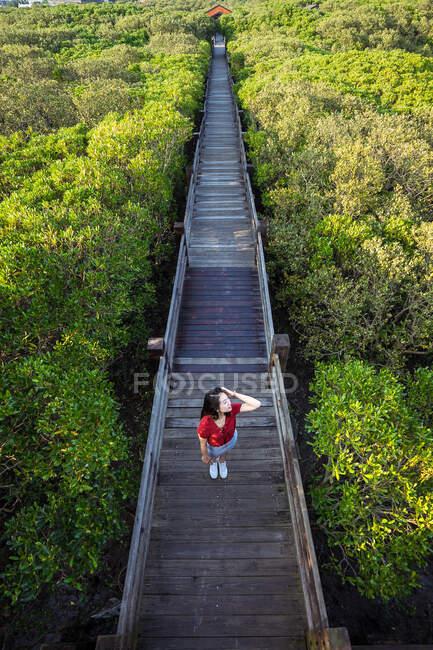 D'en haut de la jeune touriste féminine touchant les cheveux tout en se tenant sur un étroit pont en bois entouré par la forêt par une journée ensoleillée — Photo de stock
