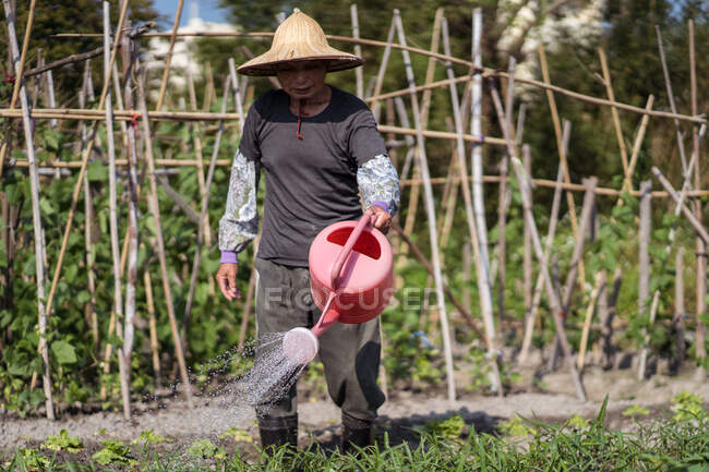 Middle aged Asian man in traditional oriental straw hat using watering pot while pouring green plants growing in garden in Taiwan — Stock Photo