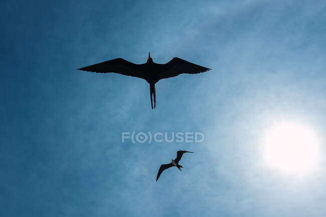Low angle view of flying seagulls silhouettes blue cloudy sky with bright sun — Stock Photo