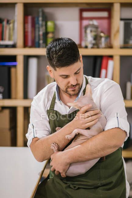 Artisanat en chemise blanche et tablier vert tout en portant calme chat Sphynx sur les mains dans le studio moderne — Photo de stock