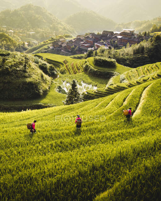 From above of rice terraces with green plants and workers with small city under fog on slope of hill in Longsheng — Stock Photo