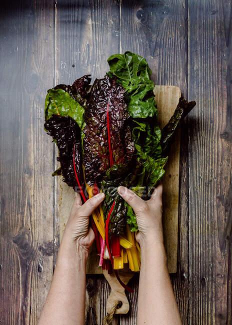 Сверху неузнаваемая женщина держит связку ярких разноцветных свежих листьев съедобных трав и овощей поверх деревянной доски, размещенной на старом деревенском столе — стоковое фото