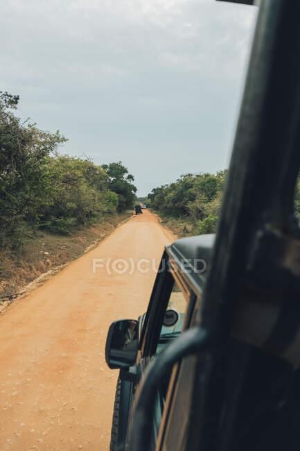 Удивительный пейзаж сафари-парка с автомобилями на извилистой дороге в окружении зеленых деревьев — стоковое фото