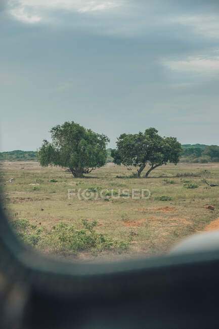 Automobile on rural roadway in wildlife park on cloudy day in summer — Stock Photo