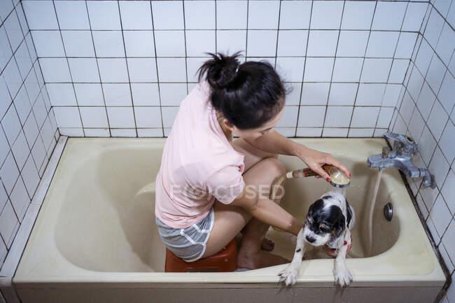 Desde arriba vista superior de propietaria irreconocible sentada en la bañera y lavando lindo cachorro Cocker Spaniel en casa - foto de stock