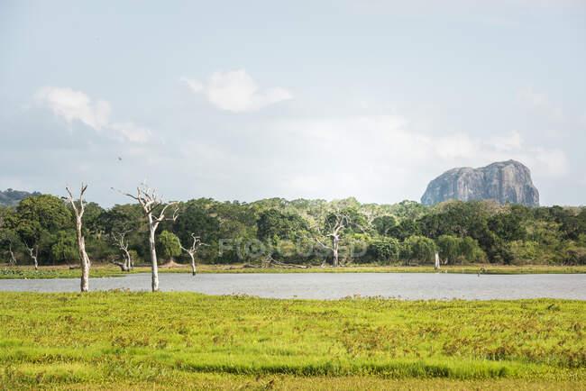 Saftiges Flussufer mit grünen Wiesen im tropischen Park von Tissamaharama — Stockfoto