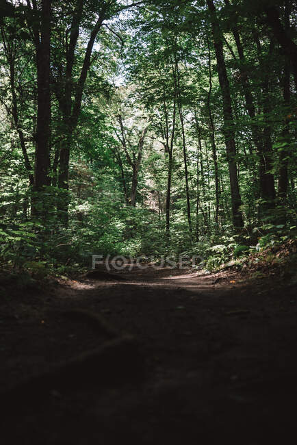 Landscape with tall trees in green forest of La Mauricie National Park in Quebec, Canada — Stock Photo
