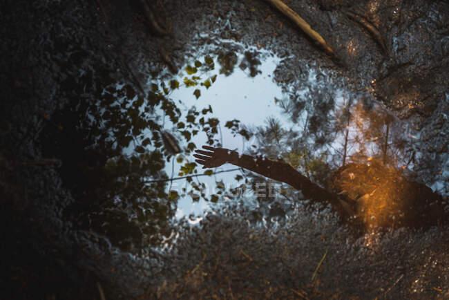 Зверху видніється невелика калюжа з водою, що відбиває руку анонімних людей і гілок дерев у спокійний день у лісі Національного парку Ла - Маурічі (Квебек, Канада). — стокове фото