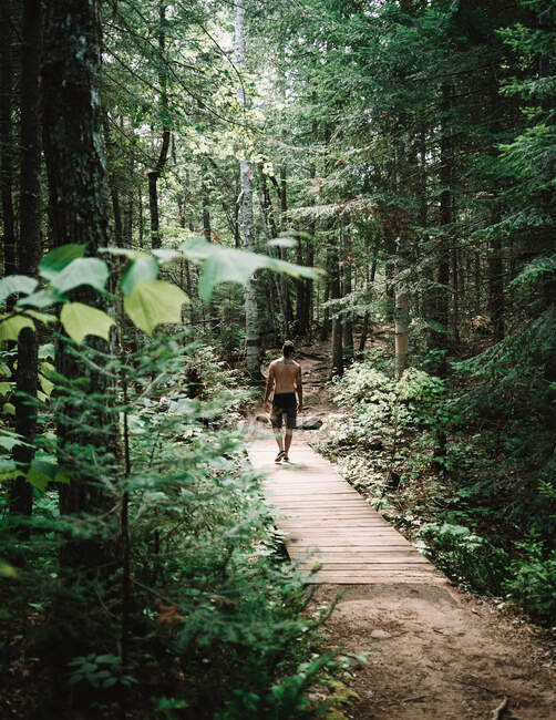 Back view of man standing on lumber path and enjoying weather in green forest of La Mauricie National Park in Quebec, Canada — Stock Photo