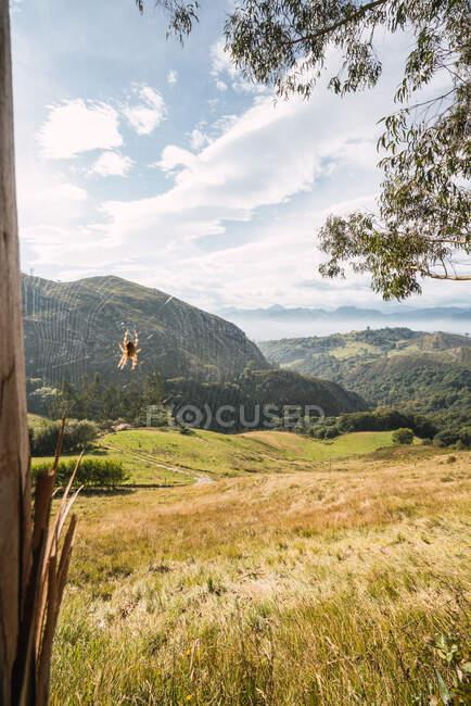 Veduta della foresta verde e delle montagne — Foto stock