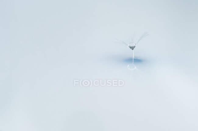 Крупный план легкого одуванчика в мягком холодном свете с отражением на фоне зеркальной поверхности — стоковое фото