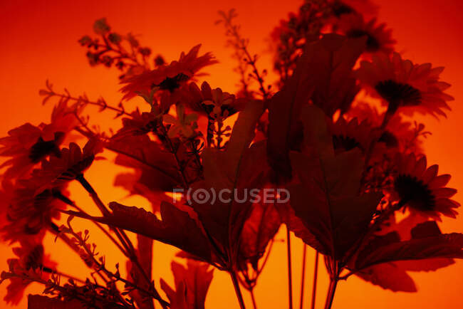 Simple bouquet of bright artificial flowers composed against illuminated background with orange light — Stock Photo