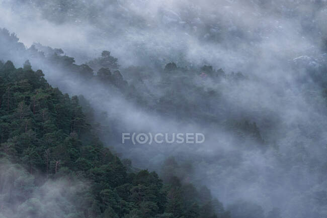 Majestic scenery of woods in mountainous terrain covered with dense mist in Sierra de Guadarrama National Park — Stock Photo