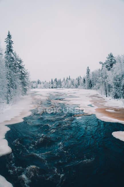 Vista panoramica del fiume ghiacciato circondato da alti alberi di conifere che crescono nella foresta innevata in inverno — Foto stock