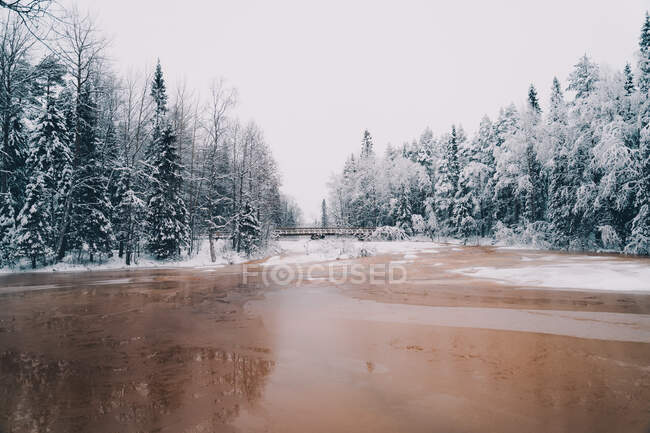 Scenic view of frozen river surrounded by tall coniferous trees growing in snowy forest in winter — Stock Photo