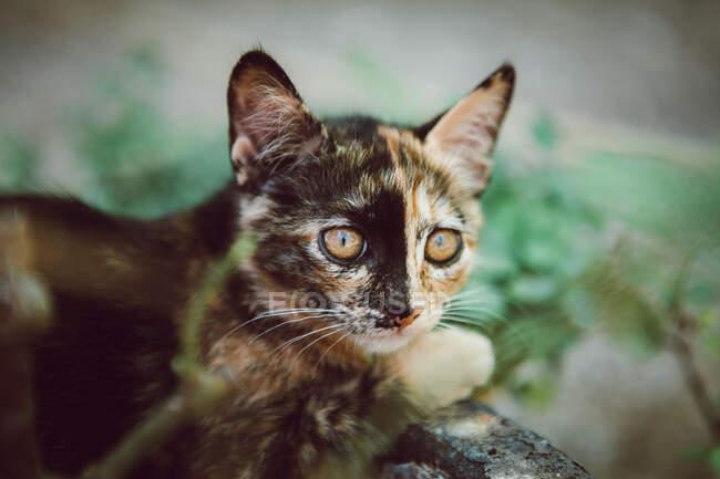 Adorable homeless kitten looking away — Stock Photo