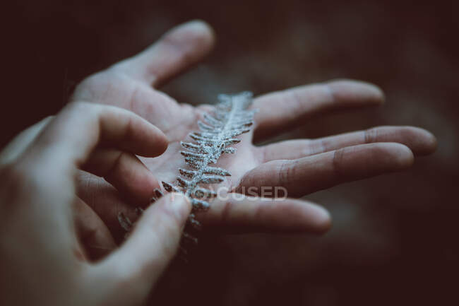 Crop anonymous person touching plant twig with frost on thin leaves on blurred background — Stock Photo