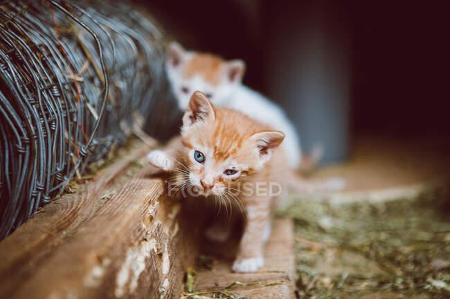 Очаровательные бездомные котята с коричневым и белым мехом на деревянной платформе возле луга, смотрящие в камеру — стоковое фото