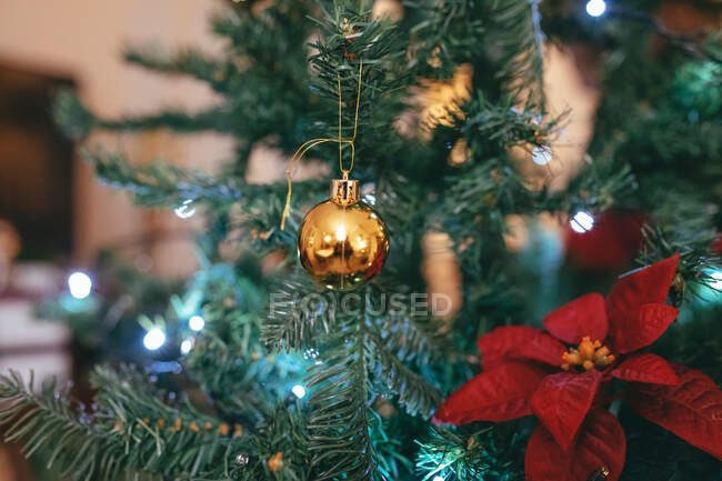 Shiny decorative ball hanging on golden lace on fir tree near flower during festive event at home — Stock Photo