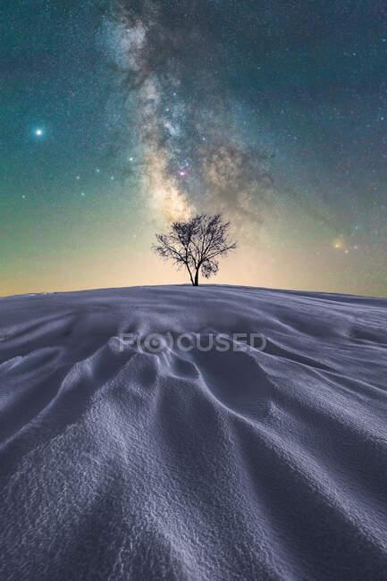 Pintoresca vista del árbol sin hojas que crece en el vasto desierto arenoso bajo un cielo oscuro brillante en el Parque Nacional Picos de Europa - foto de stock