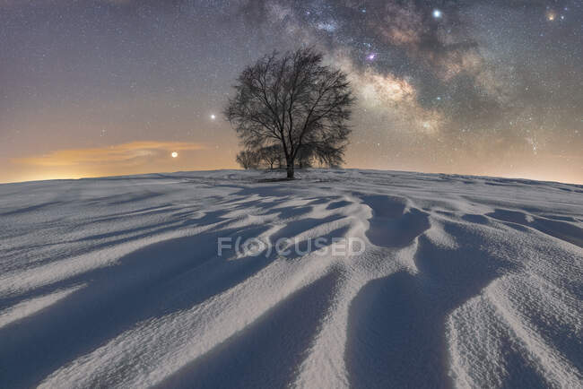 Picturesque view of leafless tree growing in vast sandy desert under glowing dark sky in Picos de Europa National Park — Stock Photo
