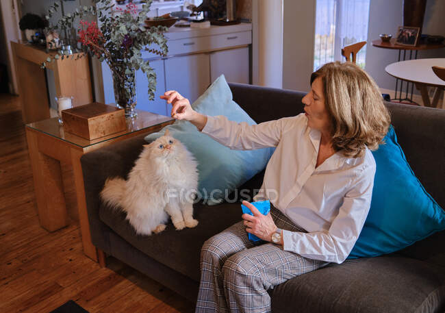 From above of aged female with treats in hand training white cat while sitting on sofa in living room at home — Stockfoto