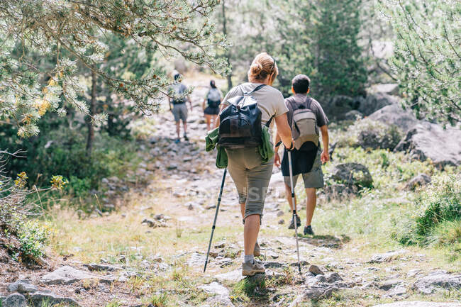 Back view of unrecognizable group of trekkers with rucksacks and poles strolling on pathway on summer day — Stock Photo
