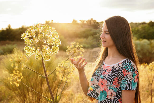Happy female gently touching garden angelica plant in field at sunset in spring — Stock Photo