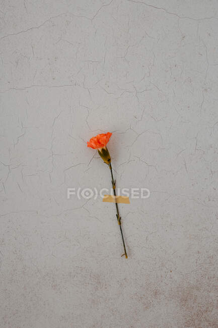 From above of composition of bright flower with sticker — Stock Photo